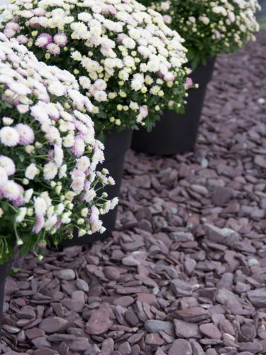 Flat Pebbles paars 30 - 60 siertuin aangelegd