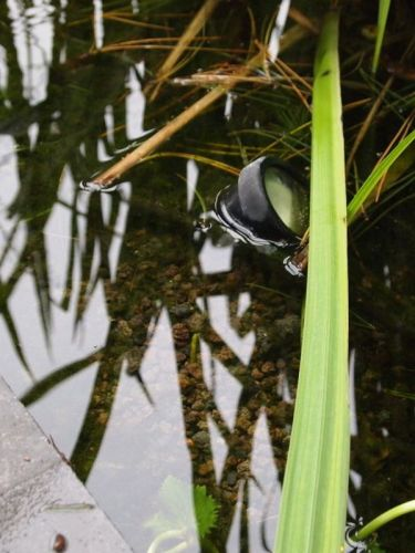 Lavamulch verwendet in Schwimmteich