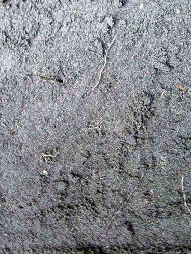 zwarte grond/ teelaarde