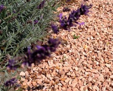 Jardines con gravilla, ¡8 ideas sencillas para su jardín!