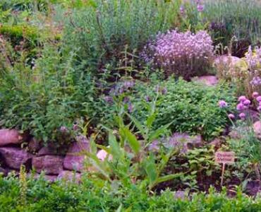 Wilde Kreativität in Ihrem Garten –  eine Naturgarten anlegen