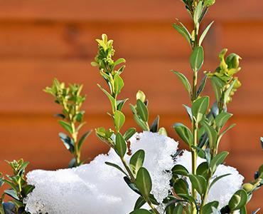 Cómo preparar tu jardín para el invierno