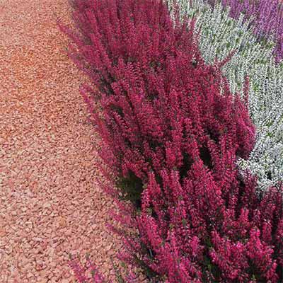 Rosso verona splitt mediterranen Garten