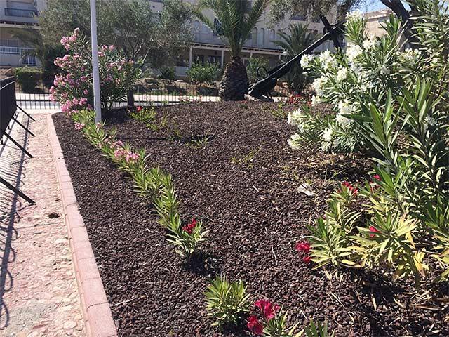 Jardin con gravilla volcanica y plantas