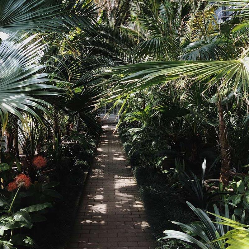 Jardín tropical con pasillo de adoquines