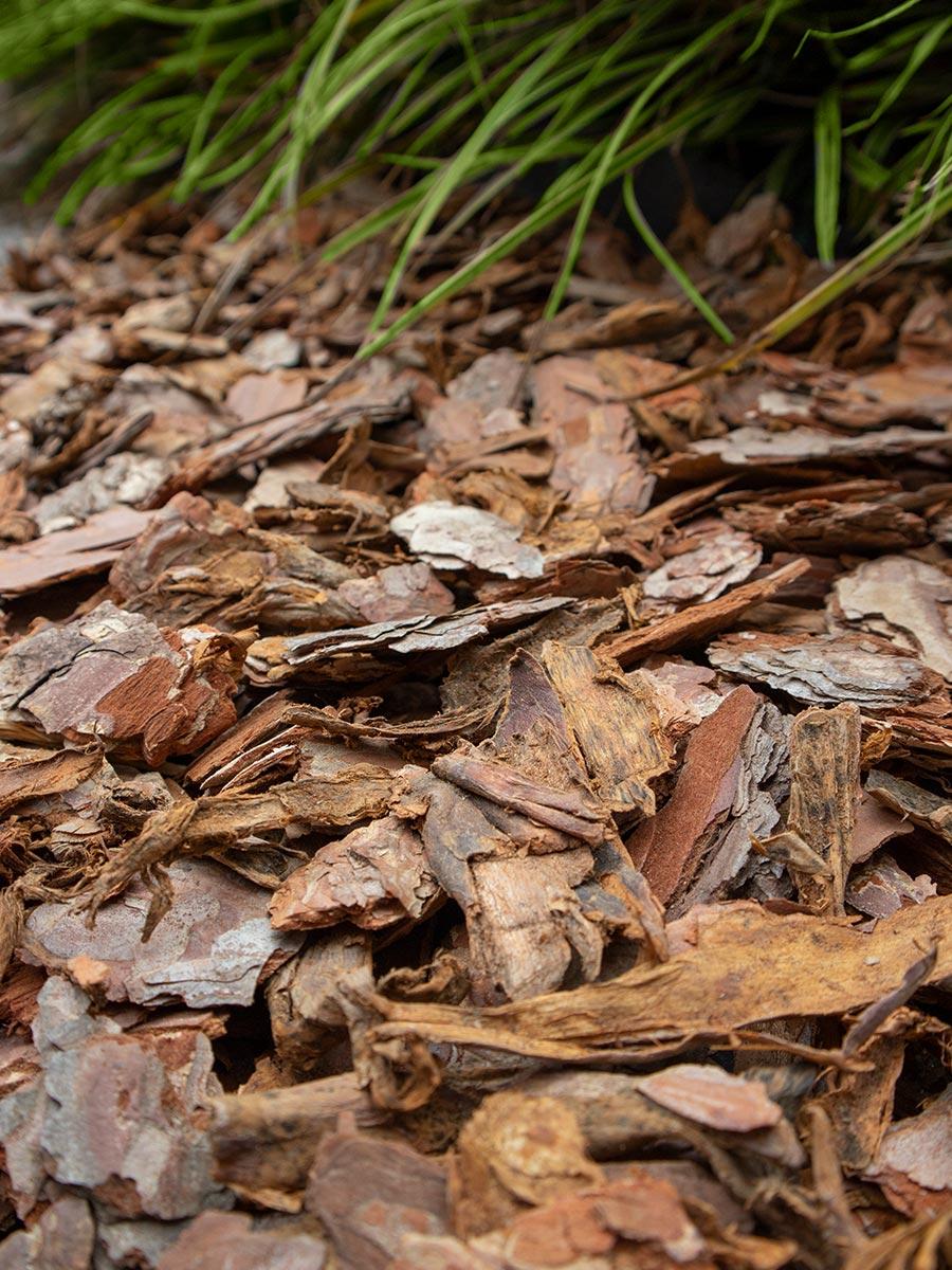 Corteza de pino instalada
